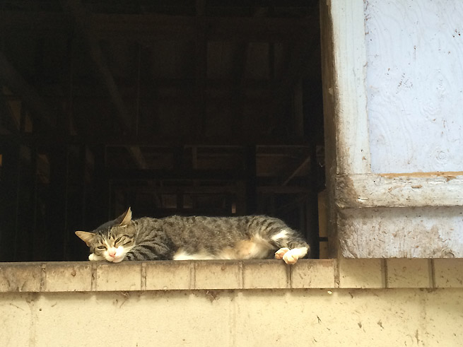 Barn Cat St. Simons Island GA